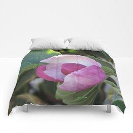 A Fig Prefigured Comforters