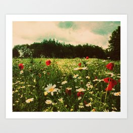Poppies in Pilling Art Print