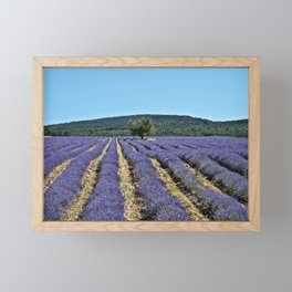 Lavender field, Provence, France Framed Mini Art Print