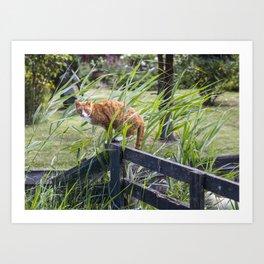 Cat on perch Art Print