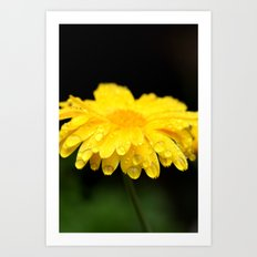yellow flower with raindrops Art Print