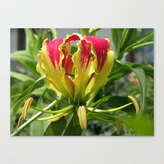 Gloriosa Rothschelidiana Canvas Print