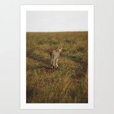 Cheetah Trail Art Print