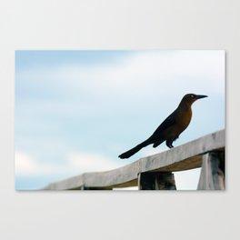 Bird collection _ 01 Canvas Print