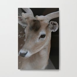 Young deer, portrait Metal Print