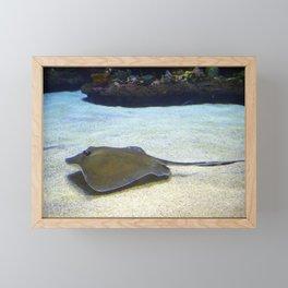 Stingray Framed Mini Art Print