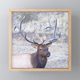 Watercolor Elk Bull 50 Framed Mini Art Print