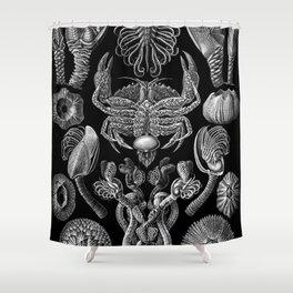 Ernst Haeckel Cirripedia Barnacles Crabs Shower Curtain