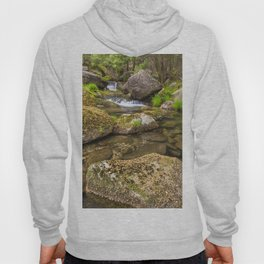 Acacia forest in autumn Hoody