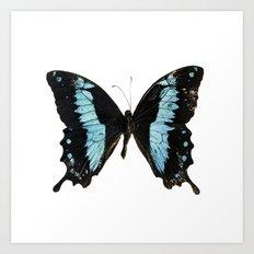 Butterfly #4 Art Print