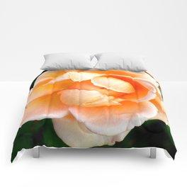 Orange Cream Rose Comforters