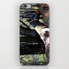 Horse with Blue Bridle iPhone & iPod Skin