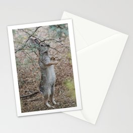 Cottontail's lunch Stationery Cards