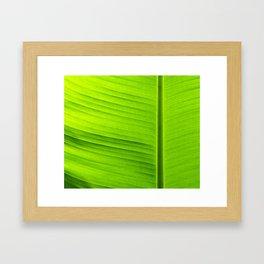 banana tree leaf Framed Art Print