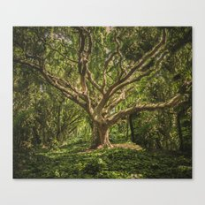 Spirits inside the wood Canvas Print