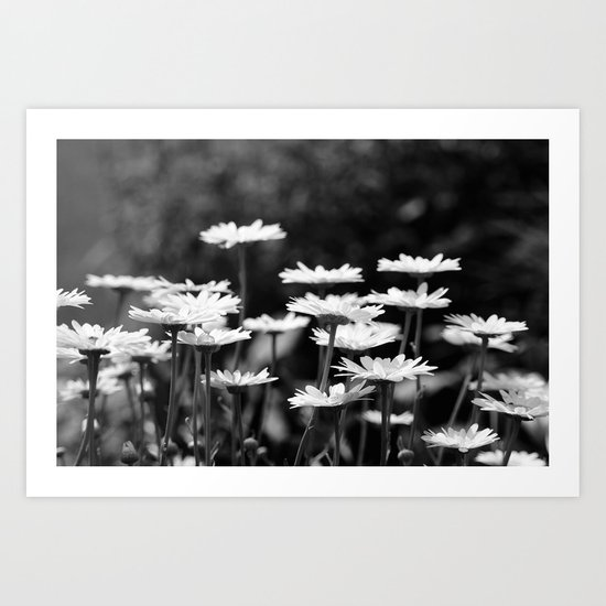 A field of dasies. Art Print