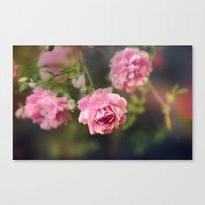 Pink Drift Canvas Print