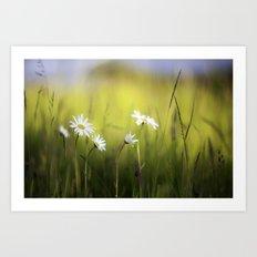 Daisy Landscape Art Print