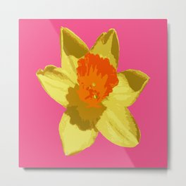 Spring Daffodil Isolated On Hot Pink Metal Print