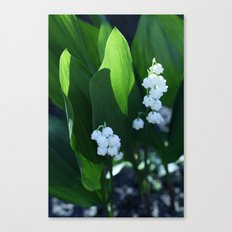 flowers: lilies  Canvas Print