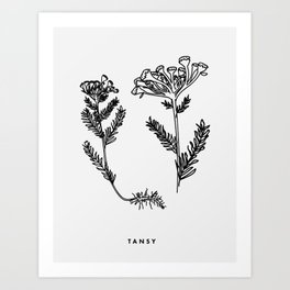 Tansy Botanical Art Print