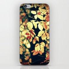 Autumnally iPhone & iPod Skin