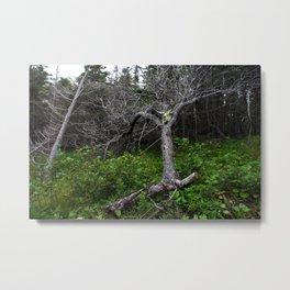Forest Spirit (Full image skull and trunk)  Metal Print