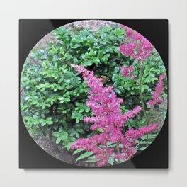 Pink Astilbe Metal Print