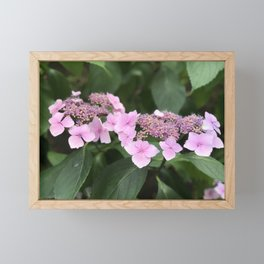 Pink flower in Butchart's Garden Framed Mini Art Print