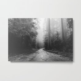 Redwood Forest Adventure Black and White - Nature Photography Metal Print