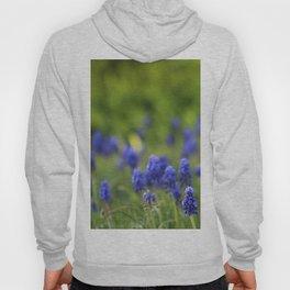 Grape Hyacinth in Spring Hoody