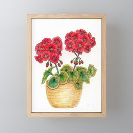 Red Geranium in Terracotta Pot, variegated green leaves Framed Mini Art Print