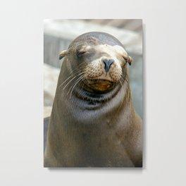 Californian Sea Lion, Monterey, California Metal Print