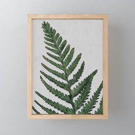 Botanical Forest Sage Green Vintage Leaf Fern, Watercolor Wall Art Farmhouse Rustic Country Nature Framed Mini Art Print