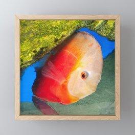 Orange Disc Fish Modern Framed Mini Art Print