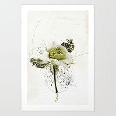 rose4 Art Print