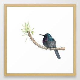Watercolor Birds: Palestine Sunbird Framed Art Print
