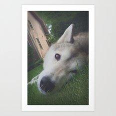 Husky 1 Art Print