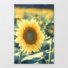 In The Sunlight Canvas Print