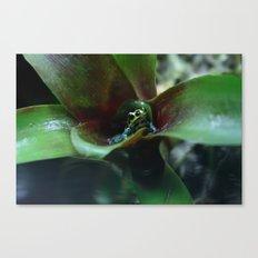 Poison dart Frog Ranitomeya Imitator  Canvas Print