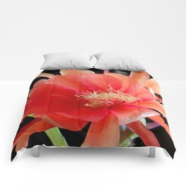 In The Jungle, The Mighty Jungle Comforters