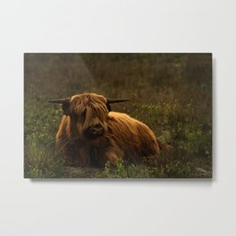 Scottish Highland hairy cow Metal Print