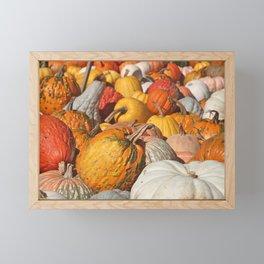 Colorful Fall Pumpkins Framed Mini Art Print