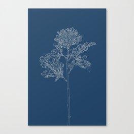 Chrysanthemum Blueprint Canvas Print