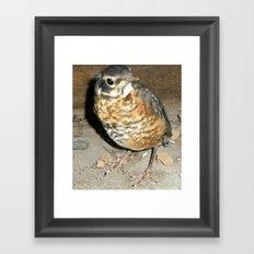 Robin Bambino Framed Art Print