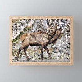 Wapiti Bugling (Bull Elk) Framed Mini Art Print