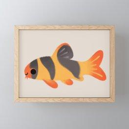 Clown loach Framed Mini Art Print