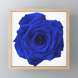 blue rose Framed Mini Art Print