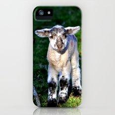 Exmoor Lamb iPhone (5, 5s) Slim Case