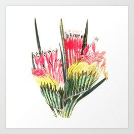 Cape Flower Art Print